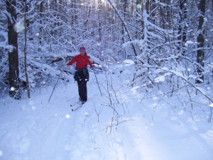 Cross-country skiing in the Finger Lakes National Forest