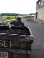 Steve inspecting Pinot Noir for Brut