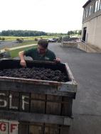Steve inspecting Pinot Noir for Brut