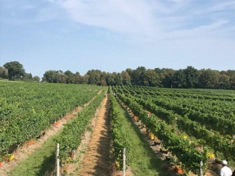 Chardonnay-Glenora Farms-Brut (9)