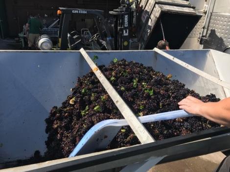 Pinot Noir-Glenora Farms-Brut (5)